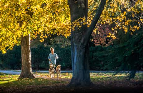 Woman walking two dogs in park